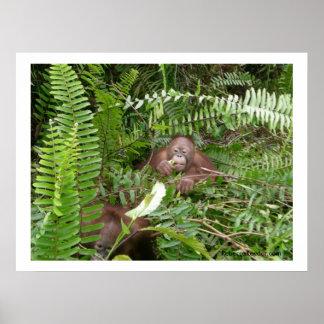 Neugierige Nachbarn im Dschungel Plakatdrucke