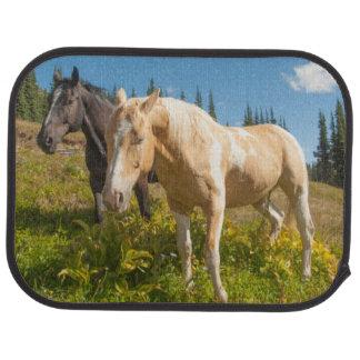 Neugierige Pferde, die auf Gras herumsuchen Autofußmatte