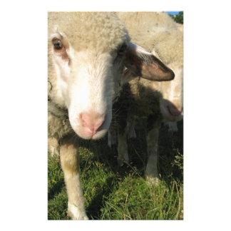 Neugierige Schafe Briefpapier