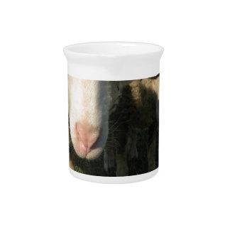 Neugierige Schafe Getränke Pitcher