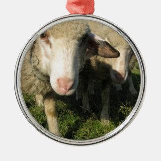 Neugierige Schafe Rundes Silberfarbenes Ornament