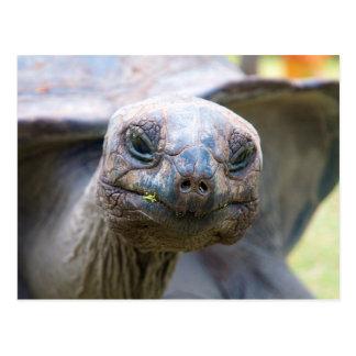 Neugierige Schildkröte Postkarte