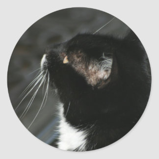 Neugieriger Katzenaufkleber Runder Aufkleber