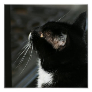 Neugieriger Katzendruck Poster