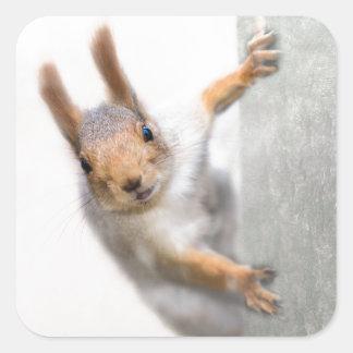 Neugieriges Eichhörnchen Quadratischer Aufkleber