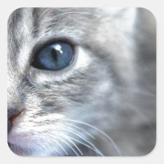Neugieriges graues Kätzchen Quadratischer Aufkleber