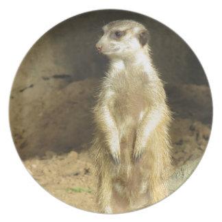 Neugieriges Meerkat Teller