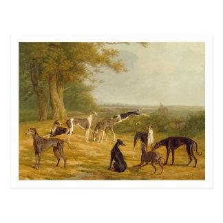 Neun Windhunde in einer Landschaft (Öl auf Postkarte