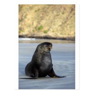 Neuseeland-Seelöwe Postkarte