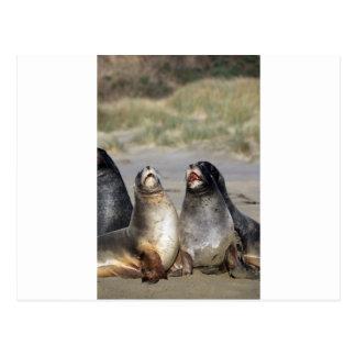 Neuseeland-Seelöwen Postkarte