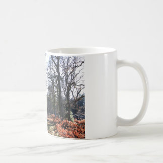 new_forest_walk.JPG Kaffeetasse