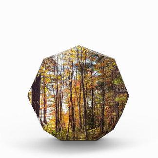 New Hampshire-Herbst-Wald Acryl Auszeichnung