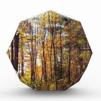 New Hampshire-Herbst-Wald Auszeichnung
