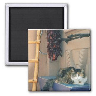 New Mexiko-Katze Quadratischer Magnet