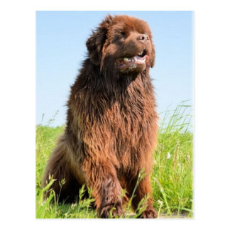 newfie sitting.png postkarte