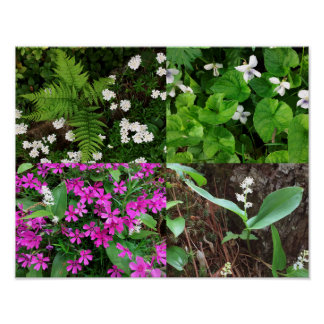 NH-Frühlings-Blumenplakat Poster