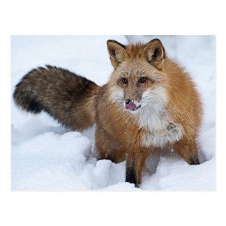 Ni roten Fox der Schnee Postkarte