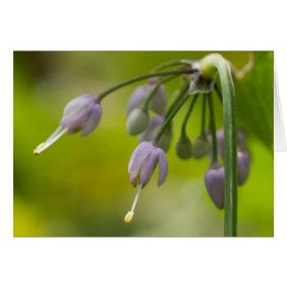 Nickende wilde Zwiebel-lila lila Wildblume-Karte Karte