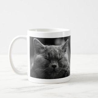 Nickerchen machende graue Katze Kaffeetasse