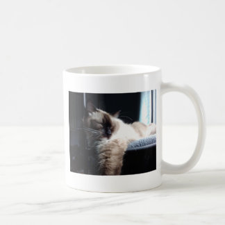 Nickerchen machende Ragdoll Katze Kaffeetasse