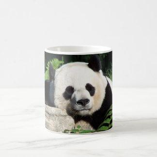 Nickerchen machender großer Panda Kaffeetasse