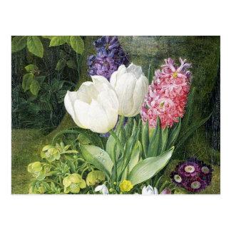 Niederländische Birnen-Frühlings-Blumen Postkarte