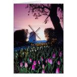 Niederländische Windmühle am Sonnenuntergang in Ho