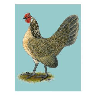 Niederländisches Zwerghuhn:  Blaue Wachtel-Henne Postkarte