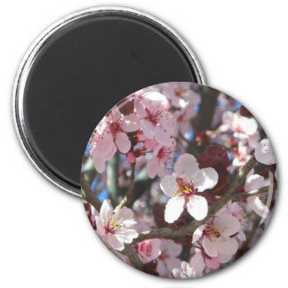 Niederlassung rosa des Blüten-Frühlings-blühenden Runder Magnet 5,1 Cm