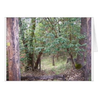 Niederlassungen im Wald Karte