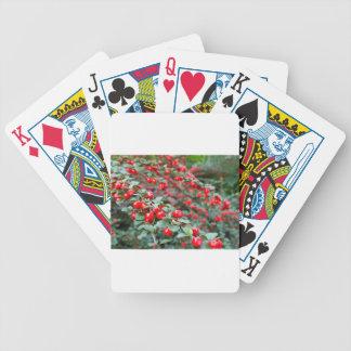 Niederlassungen mit reifen roten Cotoneasterbeeren Bicycle Spielkarten