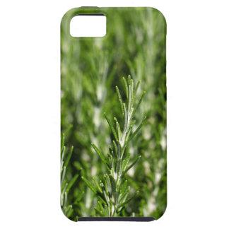 Niederlassungen Rosemarys (Rosmarinus officinalis) Etui Fürs iPhone 5