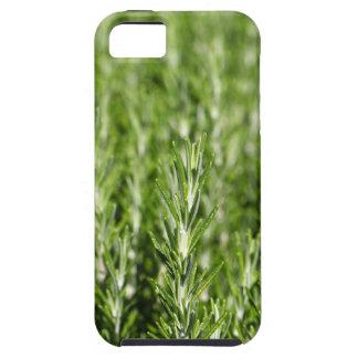Niederlassungen Rosemarys (Rosmarinus officinalis) Schutzhülle Fürs iPhone 5
