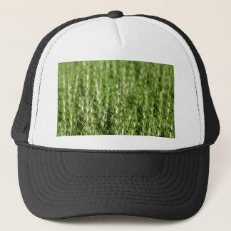 Niederlassungen Rosemarys (Rosmarinus officinalis) Truckerkappe