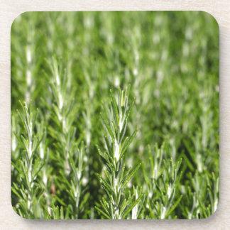 Niederlassungen Rosemarys (Rosmarinus officinalis) Untersetzer