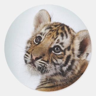 Niedlich-klein-Tiger Runder Aufkleber