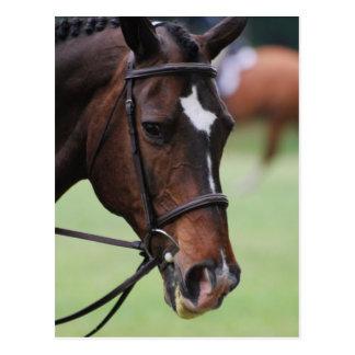Niedliche arabische Pferdepostkarten