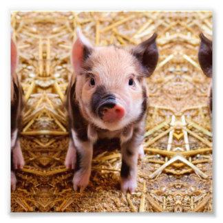 Niedliche Baby-Ferkel-Vieh-Babys Photo Drucke