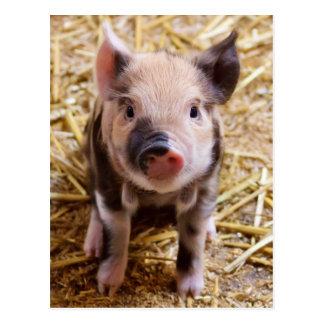 Niedliche Baby-Ferkel-Viehbarnyard-Babys