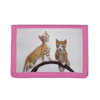 Niedliche Baby-Katzen-Kätzchen-lustiges