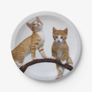 Niedliche Baby-Katzen-Kätzchen-lustiges Pappteller