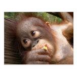 Niedliche Baby-Orang-Utan Träume der Mama Postkarte
