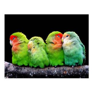 Niedliche bunte Papageien, die auf einer Postkarte
