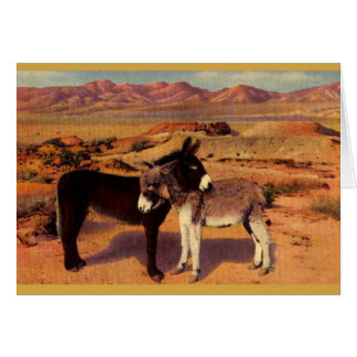Niedliche Burros in der Wüste Karte