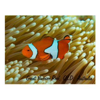 Niedliche Clownfish Postkarte