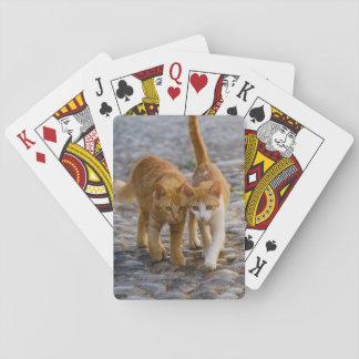 Niedliche Companioned Kätzchen gehen das gleiche Spielkarten