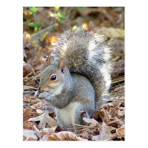 Niedliche Eichhörnchen-Postkarte