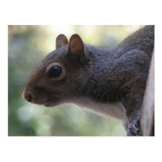 Niedliche Eichhörnchen-Postkarte Postkarte
