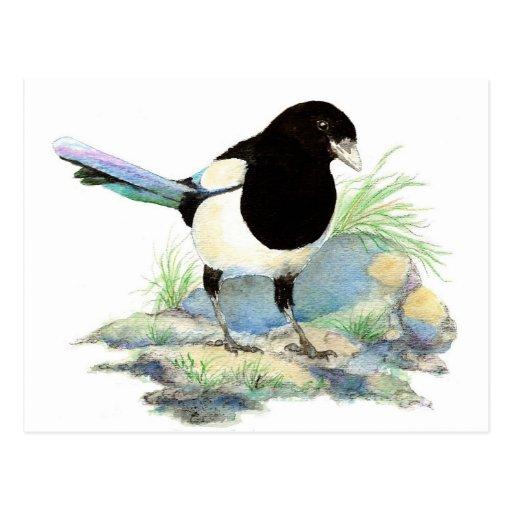 Niedliche Elster - Watercolor-Vogel Postkarte