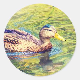 Niedliche Enten-Schwimmen Runder Aufkleber